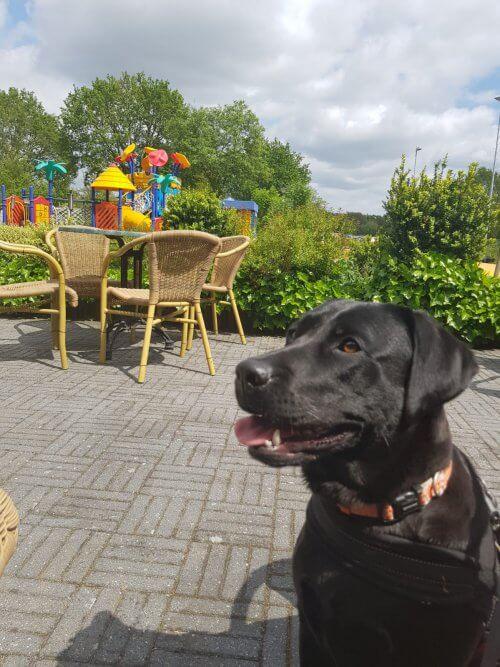 Camping met hond in Overijssel