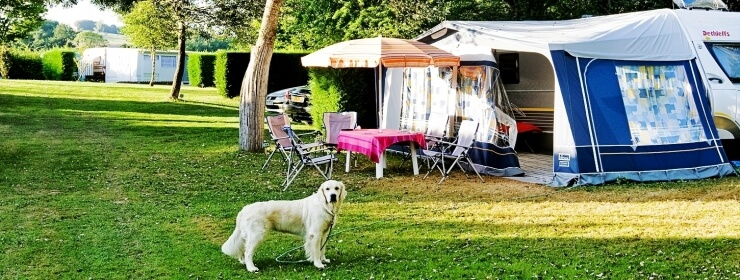 Hondencamping
