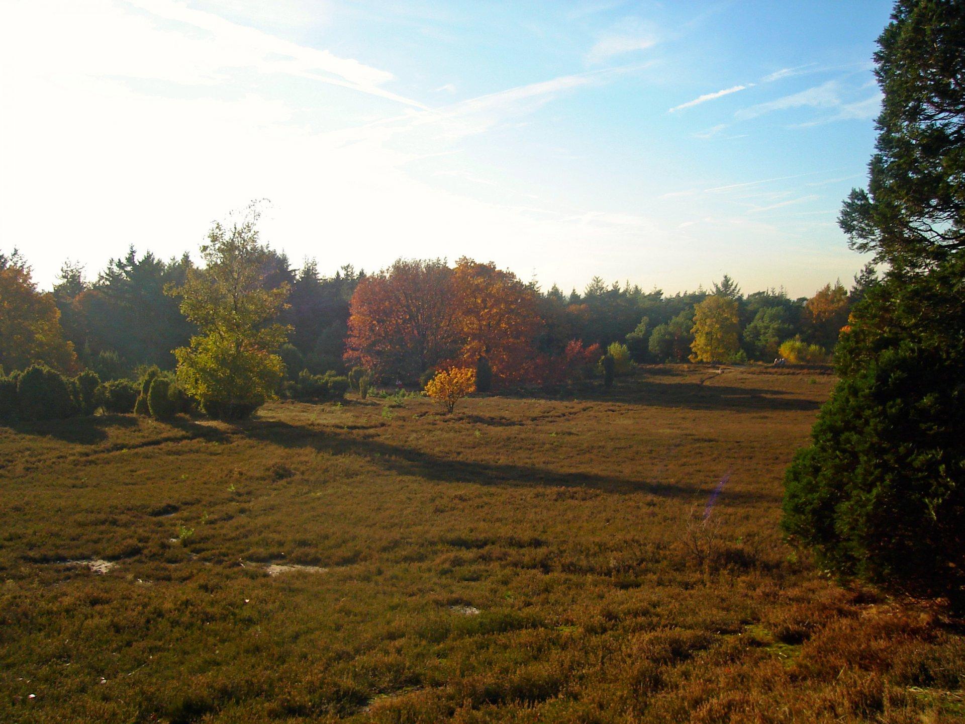 Natuurgebied Lemelerberg - natuur Overijssel