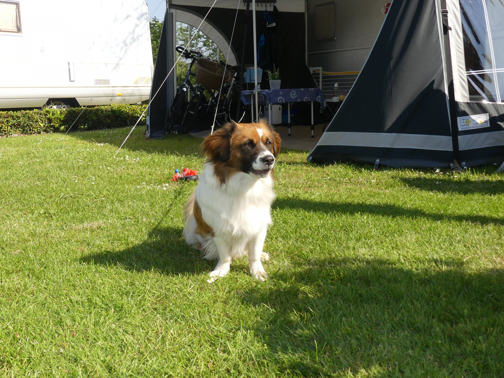Hondencamping in Overijssel - Camping Heino