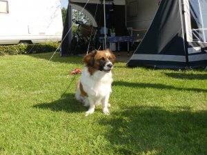 Kamperen met hond in Overijssel