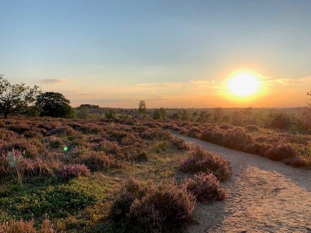 Sallandse heuvelrug natuur Overijssel